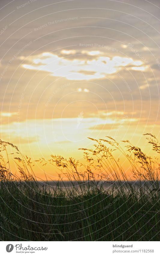 The Sun Goes Down Himmel Natur Sommer Pflanze Wasser Landschaft Sonne Meer Erholung Wolken ruhig Strand Ferne schwarz gelb Umwelt