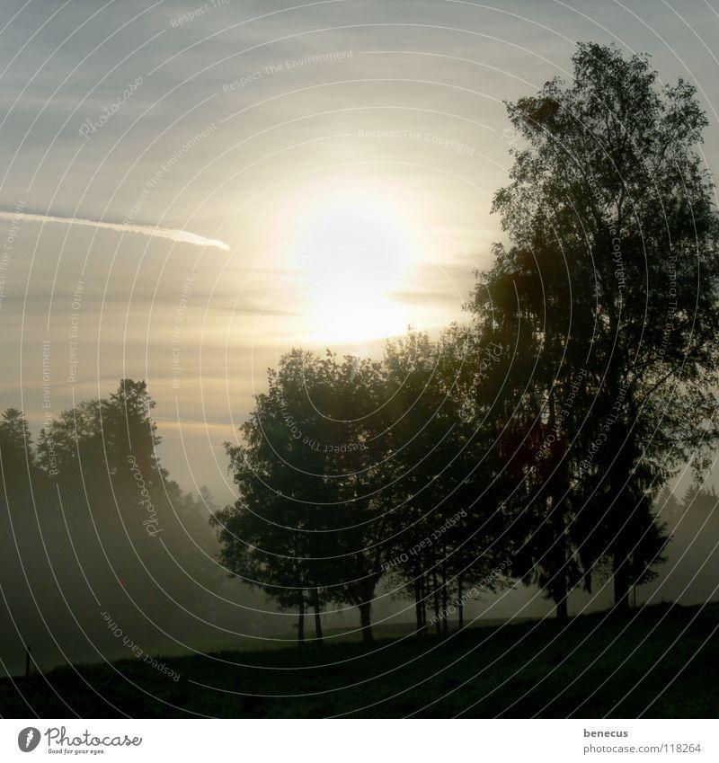 Tendenz: steigend Himmel Baum Sonne blau Wald Gras grau Landschaft Stimmung Beleuchtung Nebel Hoffnung Zukunft trist Landwirtschaft Schönes Wetter