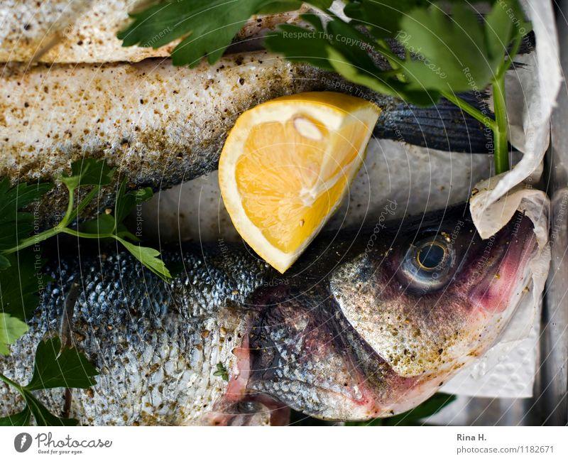 FrischeFische II frisch authentisch Ernährung genießen Kräuter & Gewürze Fisch lecker Zitrone roh Vorbereitung Grillsaison
