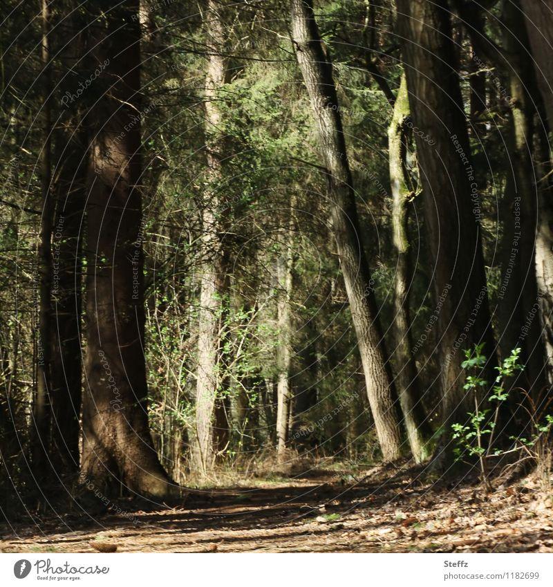 im Walde Natur Landschaft Pflanze Frühling Sommer Baum Wildpflanze Fußweg atmen dunkel natürlich Stimmung ruhig Waldstimmung Lichtstimmung Erholung braun-grün