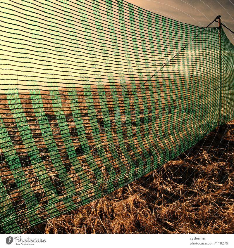 Between Colours I Winter kalt Einsamkeit ruhig Wiese grün gefroren Stimmung Sehnsucht Feld Wolken schlechtes Wetter Erscheinung Horizont Ferne Gras Barrikade