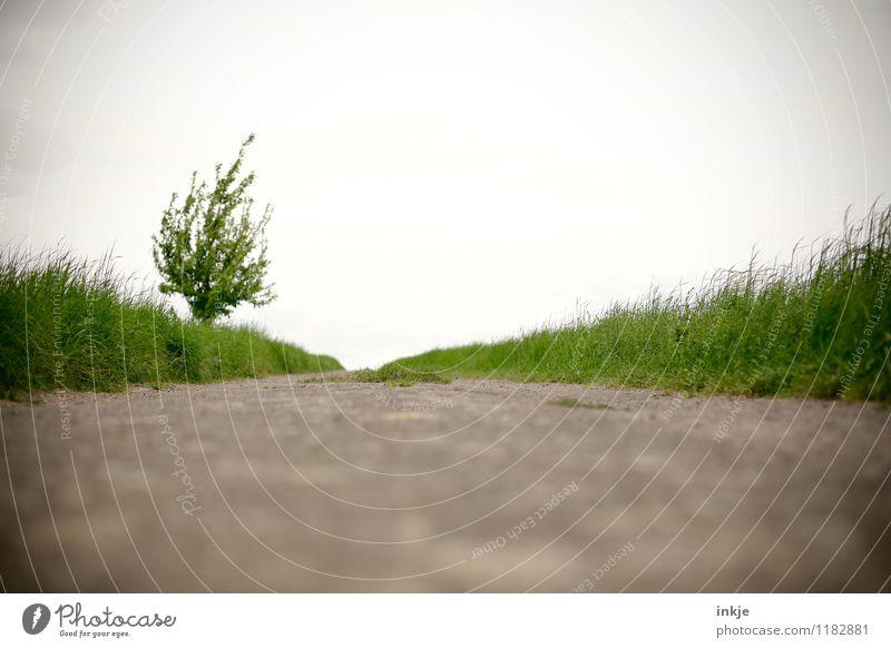 Der Tot überm Gartenzaun. Himmel Natur grün Sommer Baum Erholung Landschaft ruhig Ferne Umwelt Frühling Wiese Gras Wege & Pfade Stimmung Horizont