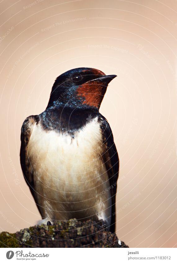 Naja Tier schwarz Vogel orange sitzen warten Neugier Symbole & Metaphern frech Märchen Vorsicht klug Weisheit skeptisch rebellisch hocken