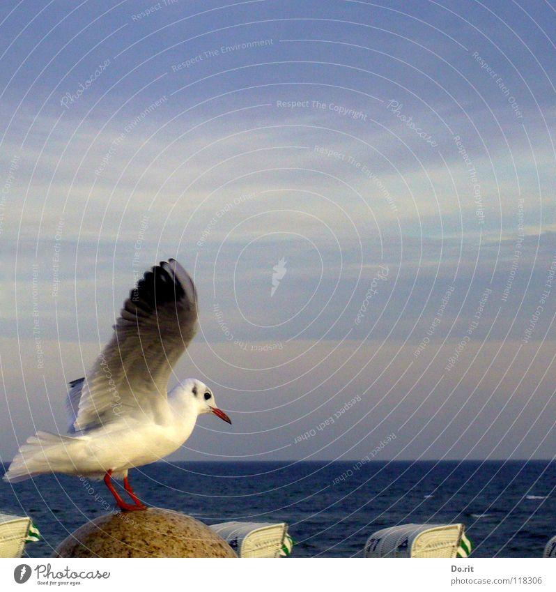 eine Möwe macht noch keinen Sommer... Herbst Strandkorb Wolkenband weiß Schnabel Meer Küste Frieden Vogel Flügel Himmel anfliegen sitzen blau Ostsee Stein