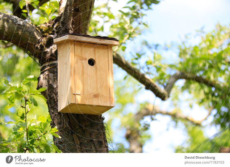 DRINGEND Nachmieter gesucht!!! Himmel Natur blau Pflanze Sommer weiß Baum Landschaft Tier Wald schwarz gelb Frühling Garten braun Vogel
