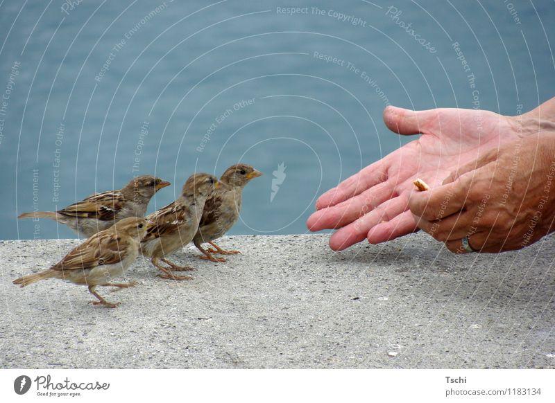 schön der Reihe nach Hand Finger Wasser Tier Vogel 4 Fressen füttern Neugier blau braun grau Tierliebe Natur Tiere Spatzen füttern zutraulich Vögel füttern