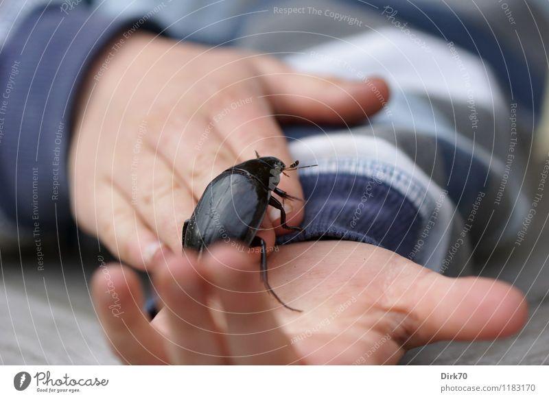 Kind mit Käfer Mensch blau weiß Hand Tier schwarz Junge grau Garten rosa Wildtier Kindheit Finger festhalten Insekt