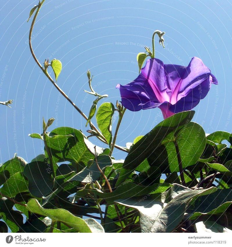 sommerlich Natur schön Himmel Meer Blume grün blau Pflanze Sommer Freude Strand Ferien & Urlaub & Reisen Farbe Blüte Frühling