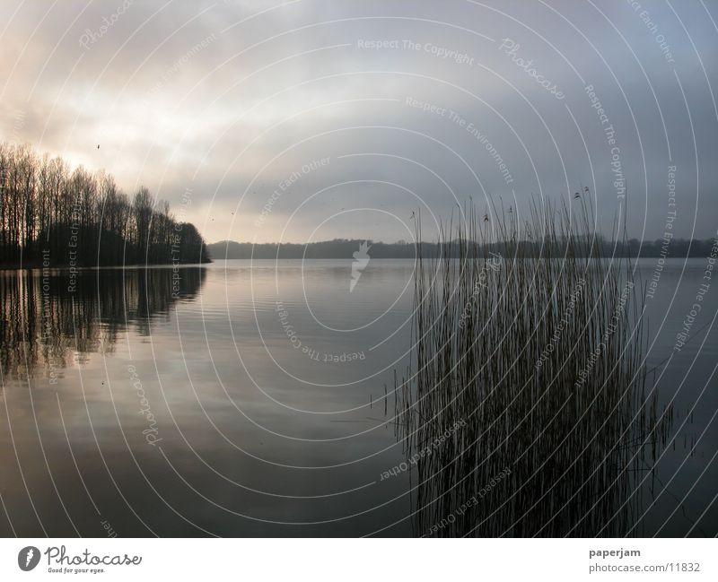 Abendstimmung am See Sonnenuntergang Schilfrohr Reflexion & Spiegelung Abendsonne Nebel Wasser