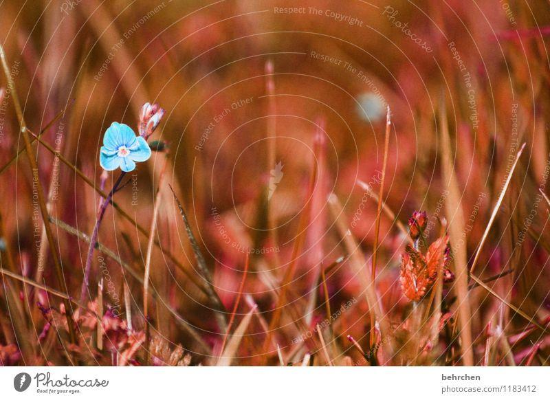 alleinstellungsmerkmal Natur Pflanze Frühling Sommer Herbst Blume Gras Blatt Blüte Veronica Garten Park Wiese Feld Blühend Wachstum außergewöhnlich klein schön
