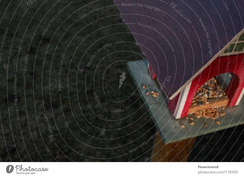 Piepmatz-Villa Futterhäuschen Vogel überwintern Winter Fressen Korn Balkon Dach Wiese Tier füttern Abendsonne Ernährung verhungern picken Schwedenhaus