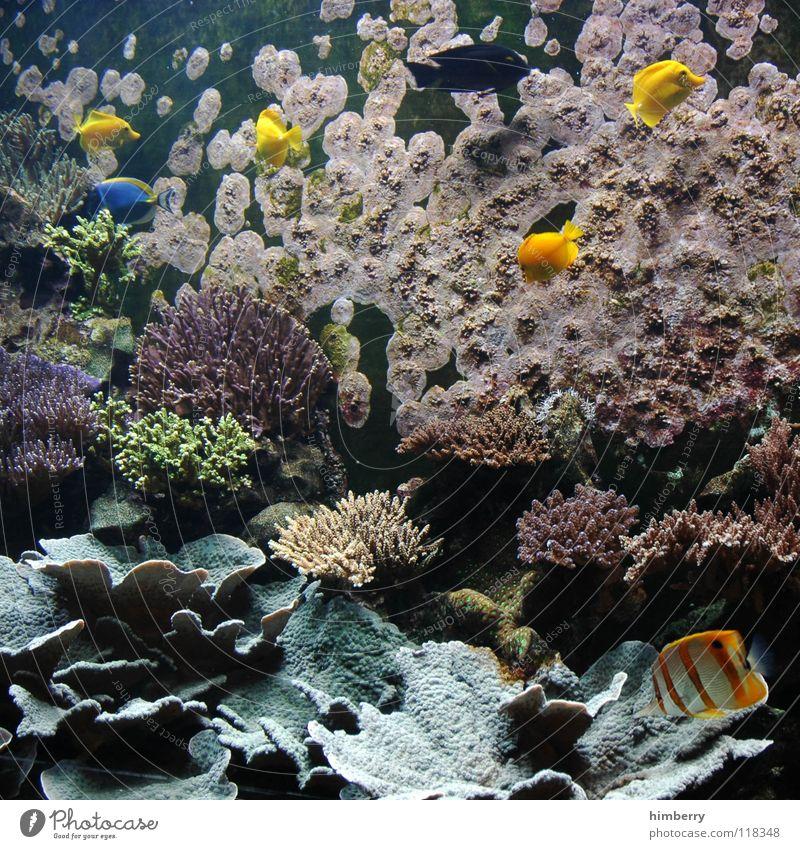 fishtank IV Aquarium Korallen Meer Fisch Wasser