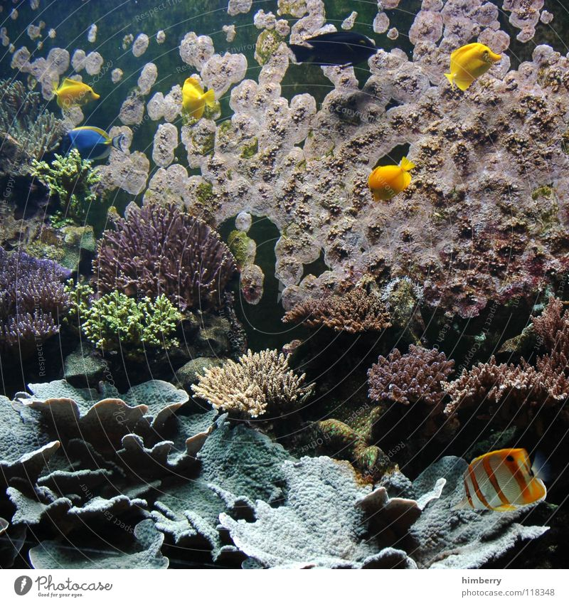 fishtank IV Wasser Meer Fisch Aquarium Korallen