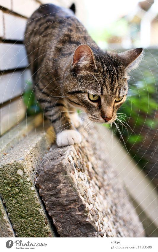 Louise lauert. Katze Tier Tierjunges Gefühle klein Garten beobachten niedlich Neugier entdecken Konzentration Haustier Jagd Tiergesicht Interesse