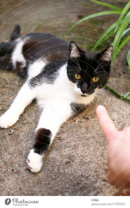 Da. Haustier Katze 1 Tier Tierjunges liegen Blick klein niedlich schwarz weiß Gefühle Zufriedenheit Akzeptanz Vertrauen Sympathie Tierliebe Gelassenheit Neugier