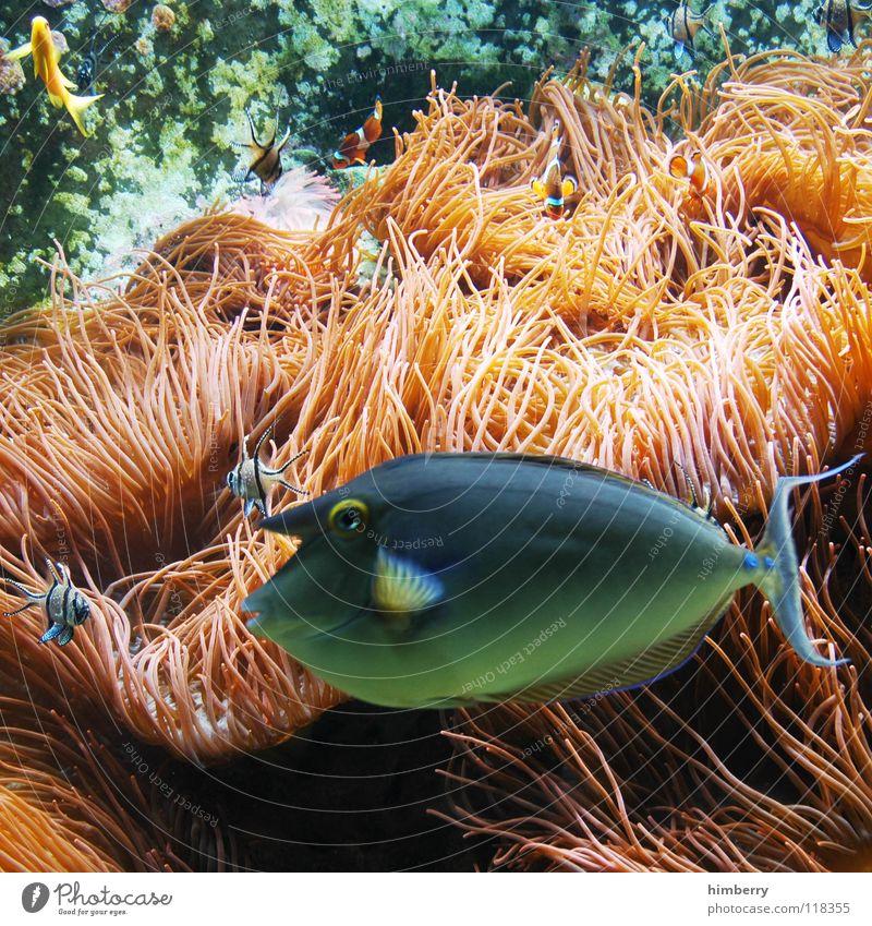 fishtank V Wasser Meer Fisch Aquarium Korallen
