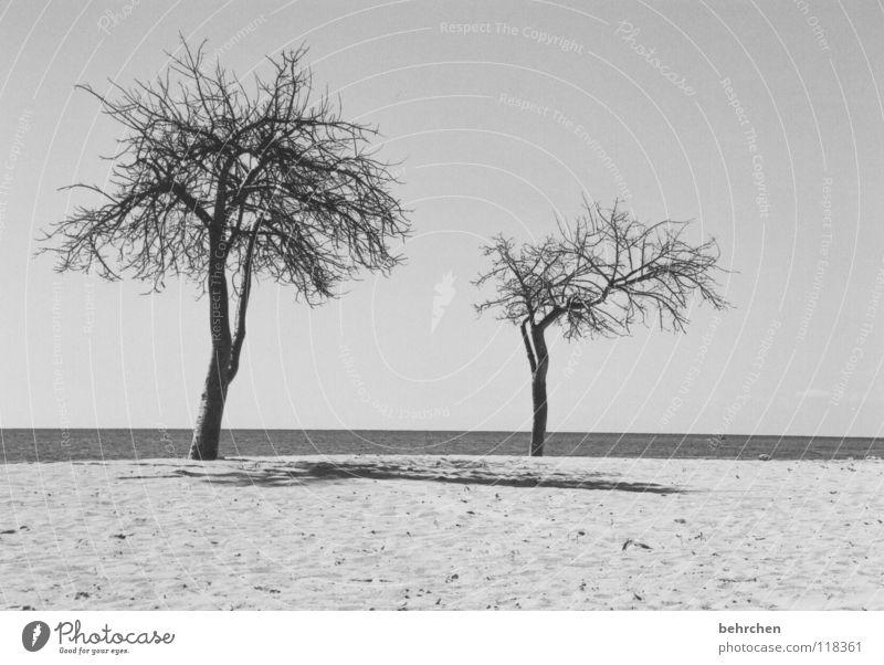 menschenleer Schwarzweißfoto Menschenleer Schatten ruhig Ferien & Urlaub & Reisen Sommer Strand Meer Sand Wasser Himmel Wärme Baum Küste heiß trocken schwarz