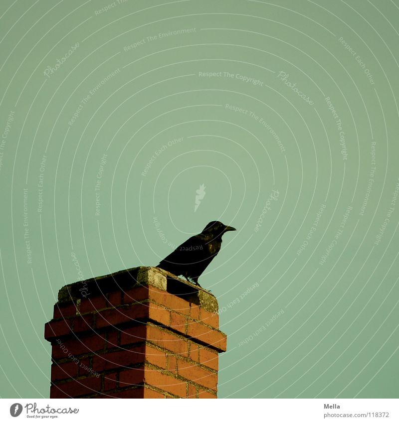 Auf dem Hexenhaus alt schwarz dunkel Vogel sitzen Aussicht Feder Vergänglichkeit verfallen Backstein Schornstein mystisch Schnabel ziehen Seele hocken