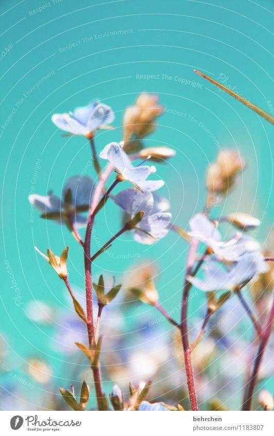 wiedermal veronica Himmel blau Pflanze schön Sommer Blume Landschaft Blatt Frühling Blüte Herbst Wiese Gras Garten Park Feld