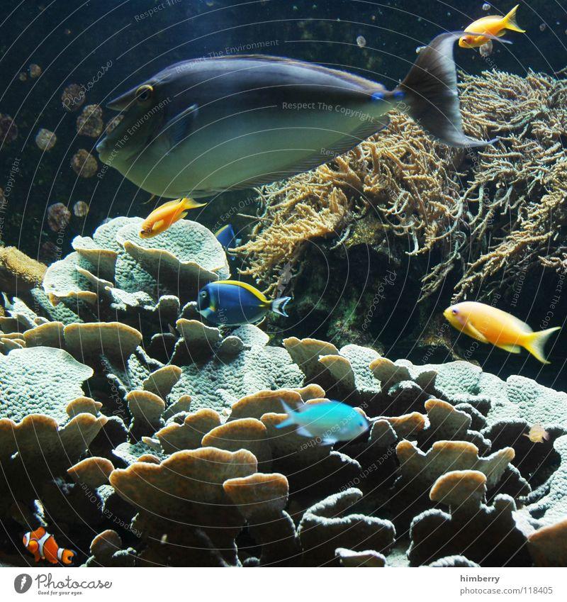 fishtank VI Wasser Meer Fisch Aquarium Korallen