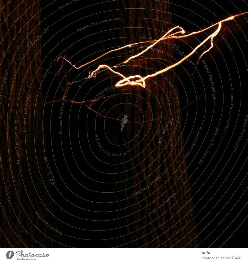 Leuchtwurm Licht Blitze Nacht dunkel Langzeitbelichtung Brand Aussehen Abend Lampe