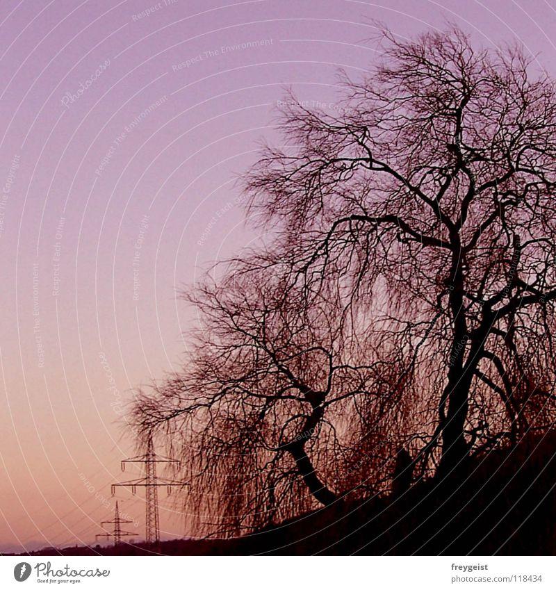 Purple Sky Natur Himmel Baum rosa Industrie Energiewirtschaft Elektrizität violett
