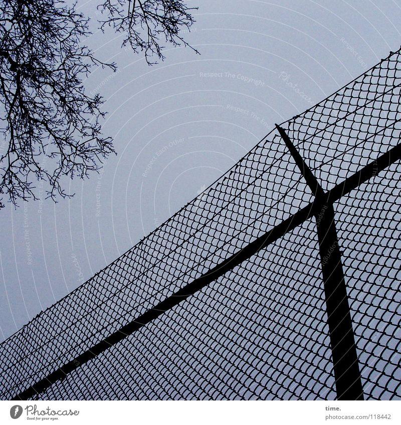 Stefan-Raab-Gedächtnismeile Baum grau Metall Ast Sicherheit stoppen Zaun Zweig Grenze Verkehrswege diagonal Gitter Draht Ballsport Golfplatz Maschendraht