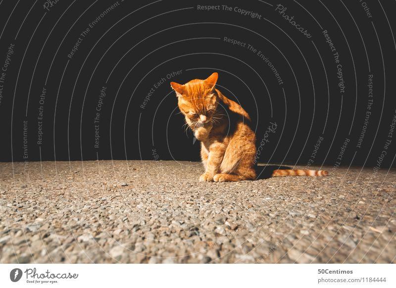 schüchterne Katze Tier Haustier 1 sitzen ästhetisch Freundlichkeit Sauberkeit gelb gold schwarz Gefühle Vorsicht geduldig ruhig Ordnung stagnierend Stimmung