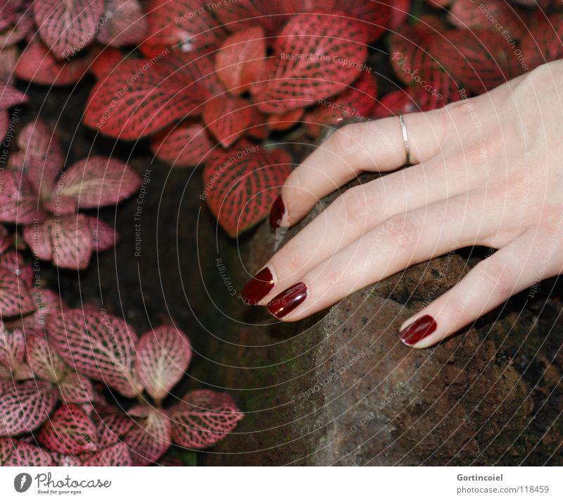 """""""Red, red, my world is red"""" Frau Natur Hand schön Pflanze rot Blatt Farbe feminin Gefühle Stein braun Haut Erwachsene Finger ästhetisch"""