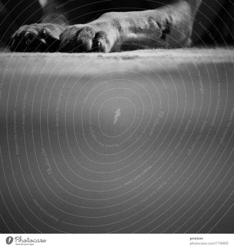 Pfoten Hund Tier Haustier Fell schwarz weiß Unschärfe Schwarzweißfoto Säugetier Wohnzimmer Beine