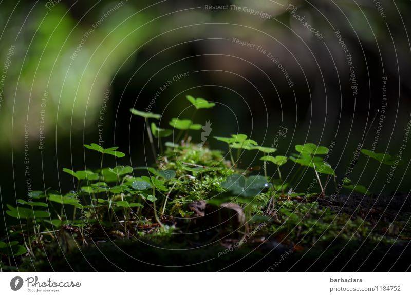 grün, grün, grün Natur Pflanze Wassertropfen Frühling Moos Klee Wald Waldboden Wachstum Duft frisch Gefühle Stimmung Lebensfreude Frühlingsgefühle Beginn ruhig