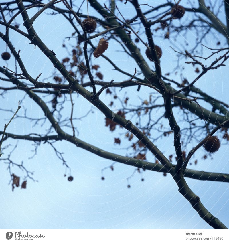 Bommelbusch I Himmel blau Baum Blatt Winter dunkel kalt Herbst Gefühle Wege & Pfade grau Traurigkeit Stimmung Zeit Angst Sträucher