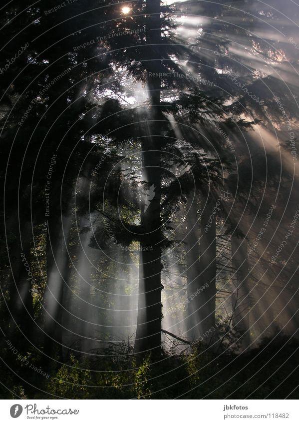 IN THE WOODS Wald dunkel schwarz Nacht Nebel bedrohlich Baum fällen Völker Baumstamm Sonne Sonnenstrahlen unheimlich Morgen Tanne Stimmung Licht mehrere unfähig