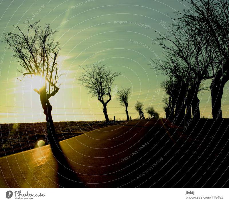 Unterwegs fahren Autofahren Baum spät Abend kalt Winter Jahreszeiten Himmel Wolken begrenzen Wegrand Feld verzweigt durcheinander Beton Asphalt Verkehrswege