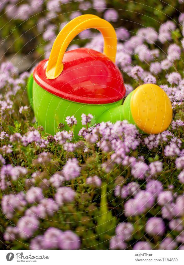 Wasserwerfer Gartenarbeit Sommer Natur Pflanze Frühling Thymian Gießkanne Spielzeug Kindergießkanne Kunststoff Blühend niedlich gelb grün violett orange rot