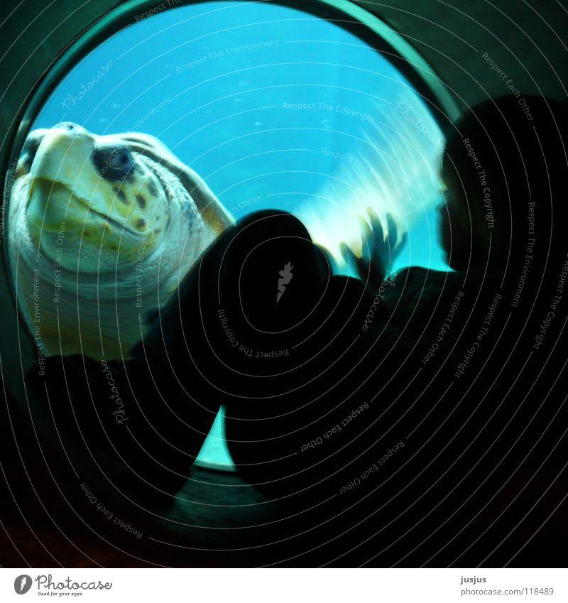 Begegnung Kind alt Meer blau Tier Unterwasseraufnahme tauchen geheimnisvoll Aquarium Umweltschutz winken begegnen Schildkröte gepanzert Meerwasser