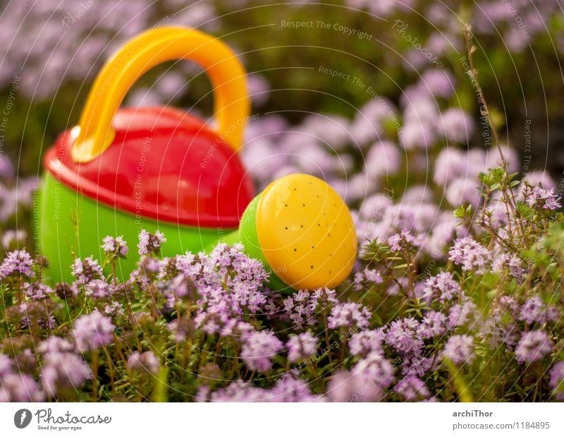 Profiwerkzeug Gartenarbeit Sommer Natur Pflanze Frühling Thymian Gießkanne Spielzeug Kindergießkanne Kunststoff Blühend niedlich gelb grün violett orange rot