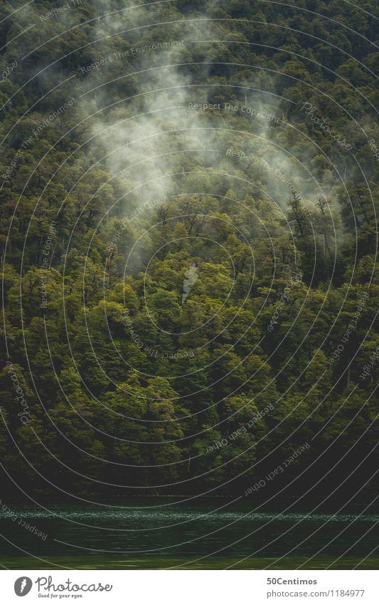 Nebel über dem Wald Angeln Jagd Ausflug Freiheit Camping wandern Natur Landschaft schlechtes Wetter Seeufer Patagonien Abenteuer entdecken Erholung