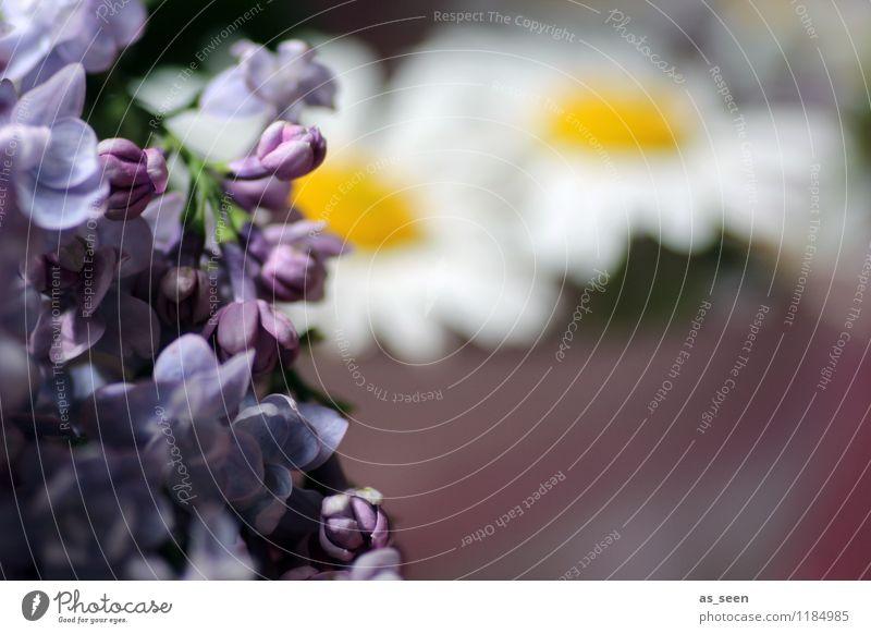 summerflowers Natur Pflanze schön Farbe Sommer weiß Blume gelb Leben Blüte Garten Lifestyle Design Wachstum elegant ästhetisch
