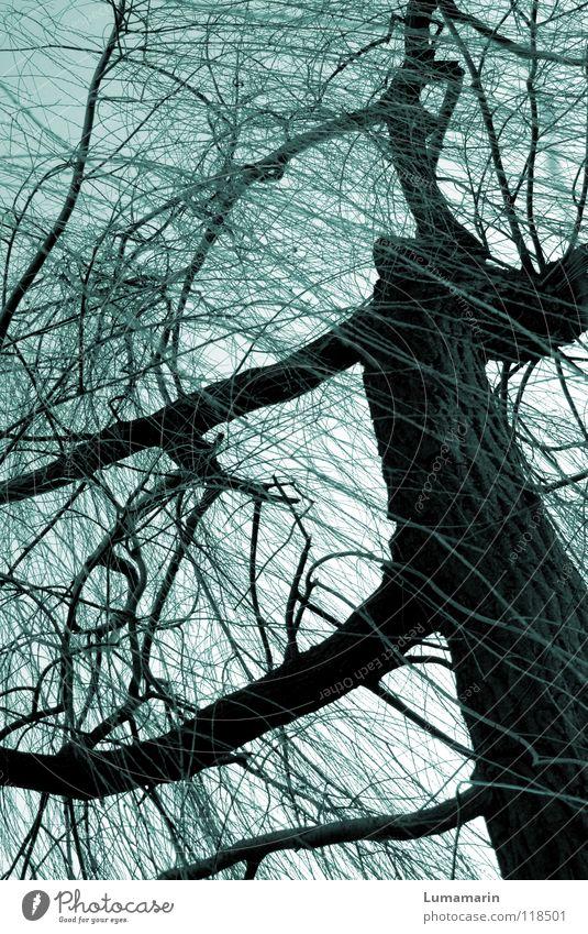 Weidenbaum Baum Baumstamm verzweigt Geäst Winter kalt dunkel Dämmerung unheimlich bedrohlich Leben seltsam geheimnisvoll Märchen fantastisch Zauberei u. Magie