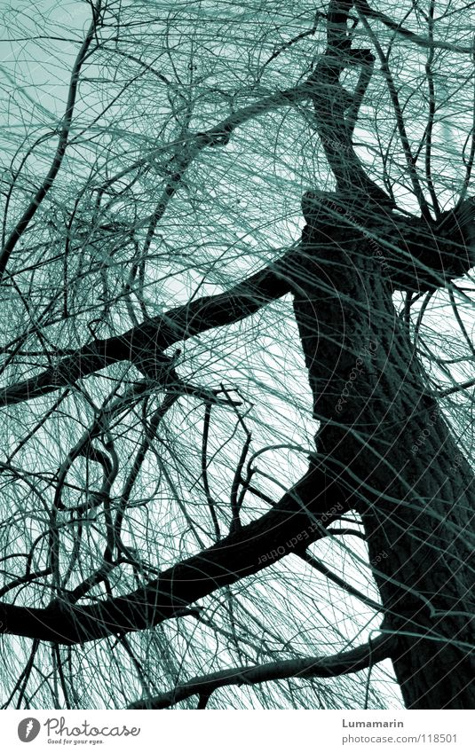 Weidenbaum Himmel Baum Winter dunkel kalt Leben Traurigkeit Kraft Wildtier fantastisch Ast bedrohlich geheimnisvoll Trauer Baumstamm Symbole & Metaphern