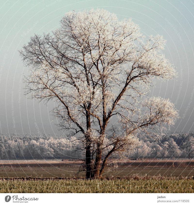 Primus Farbfoto Außenaufnahme Sonnenlicht Zentralperspektive ruhig Ferne Winter Leiter Landschaft Pflanze Schönes Wetter Eis Frost Baum Feld Wald Hochsitz alt