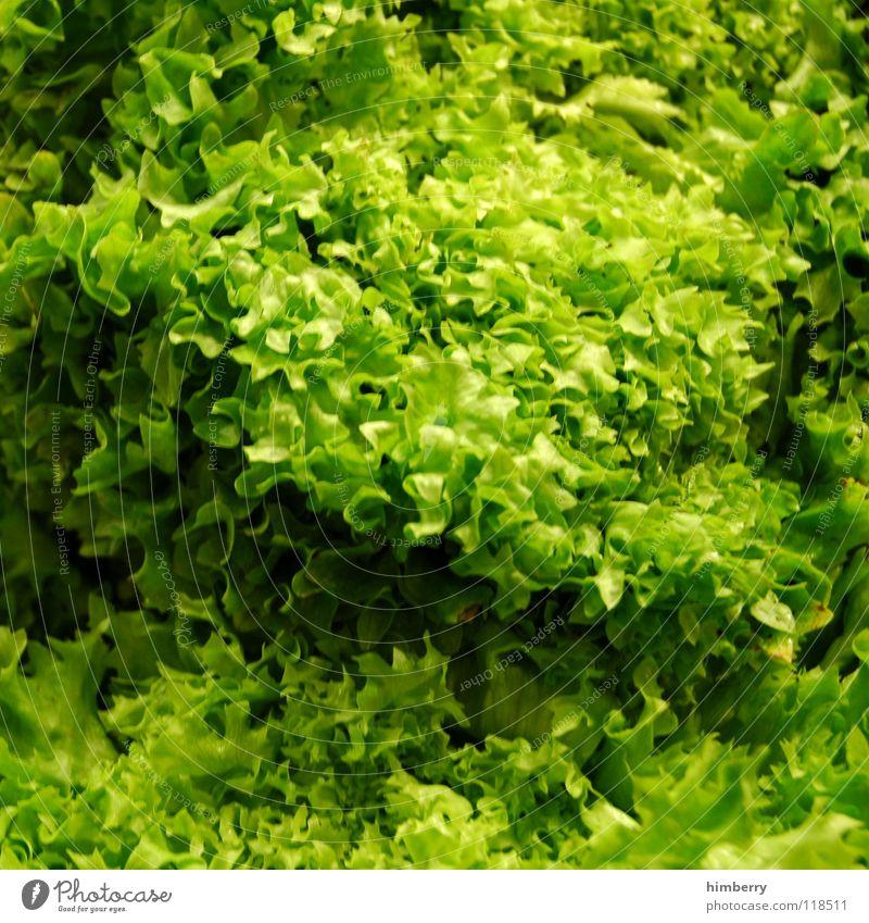 salatcase grün ökologisch Biologische Landwirtschaft Ernährung Grünpflanze Gesundheit Vitamin Gemüse Vegetarische Ernährung Salat Lebensmittel salad supermart