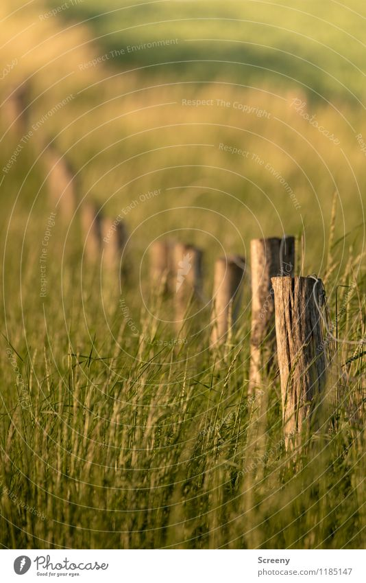 Im Feld... Natur alt Pflanze grün Sommer Landschaft ruhig Frühling Wiese Gras Wege & Pfade braun Idylle Sträucher Schönes Wetter
