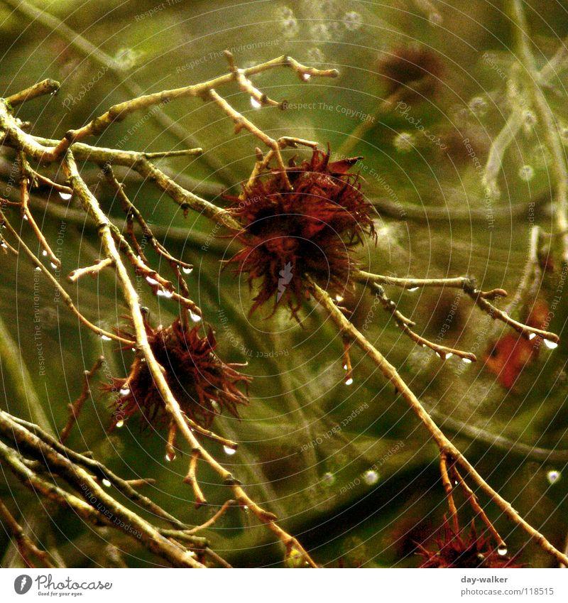 Rainy days Natur Wasser Baum grün Pflanze rot Tier Blüte Regen Wassertropfen nass Ast Gewitter feucht Unwetter