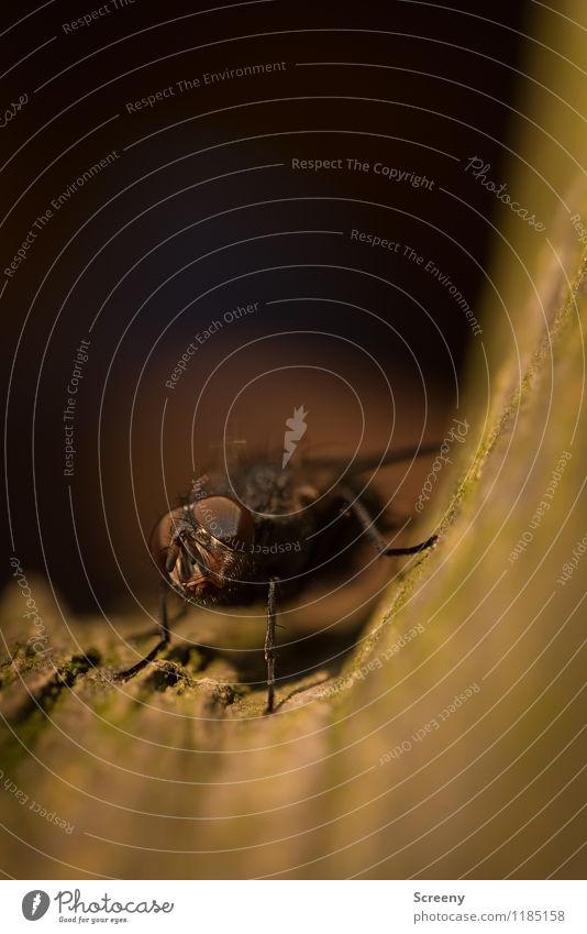 Wat willste? Natur Pflanze Tier Baum Park Wiese Insekt Fliege 1 sitzen hässlich klein Facettenauge Farbfoto Außenaufnahme Makroaufnahme Menschenleer Tag