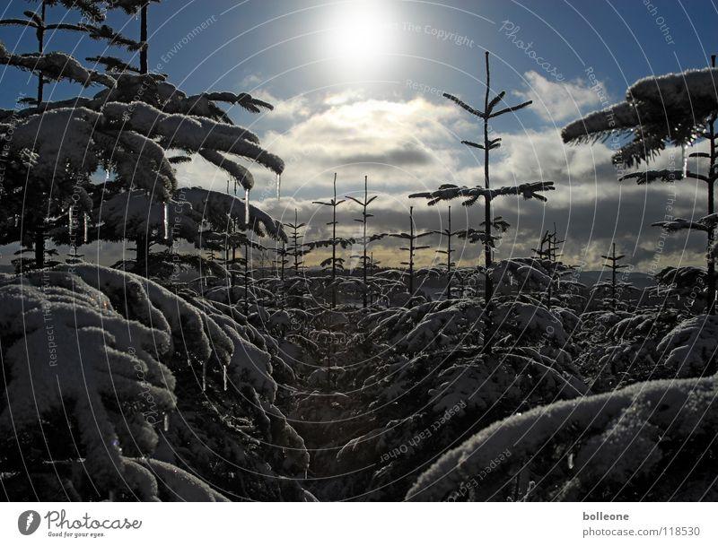 WinterWonderLänd II Himmel weiß Baum Ferien & Urlaub & Reisen Wolken ruhig Landschaft dunkel kalt Schnee Berge u. Gebirge Eis glänzend Spaziergang Tanne