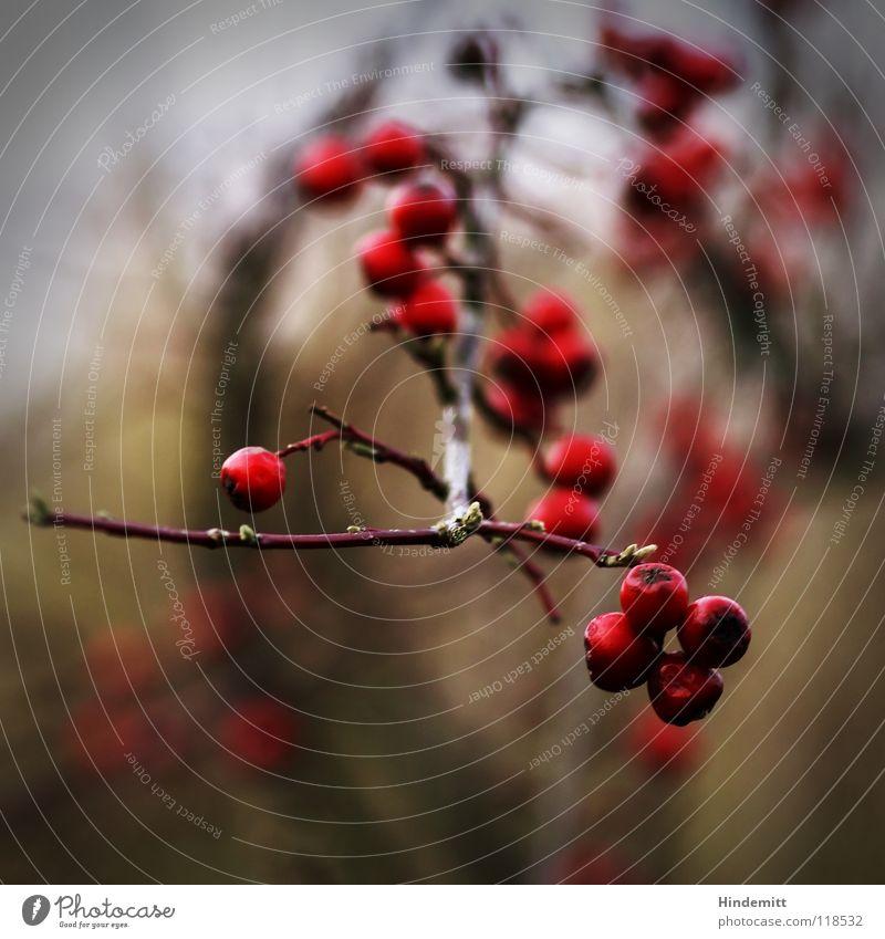 Mal wieder Bären [aber Makro] rot grün braun Ernährung Vogel Winter Herbst glänzend erleuchten Reflexion & Spiegelung Unschärfe dunkel Freundlichkeit Gift