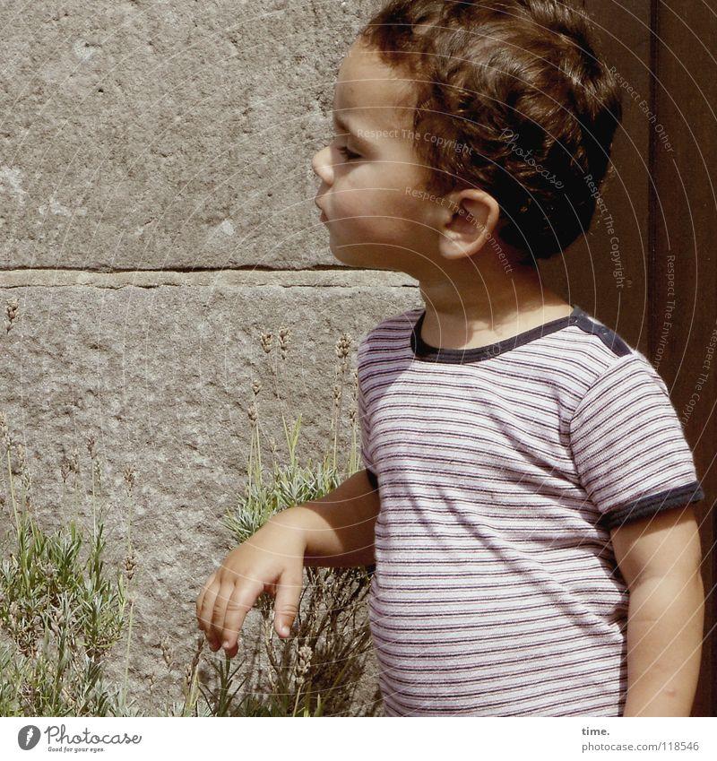 Verhaltene Neugier Kind Pflanze Sommer Junge Mauer T-Shirt Konzentration Bauch skeptisch