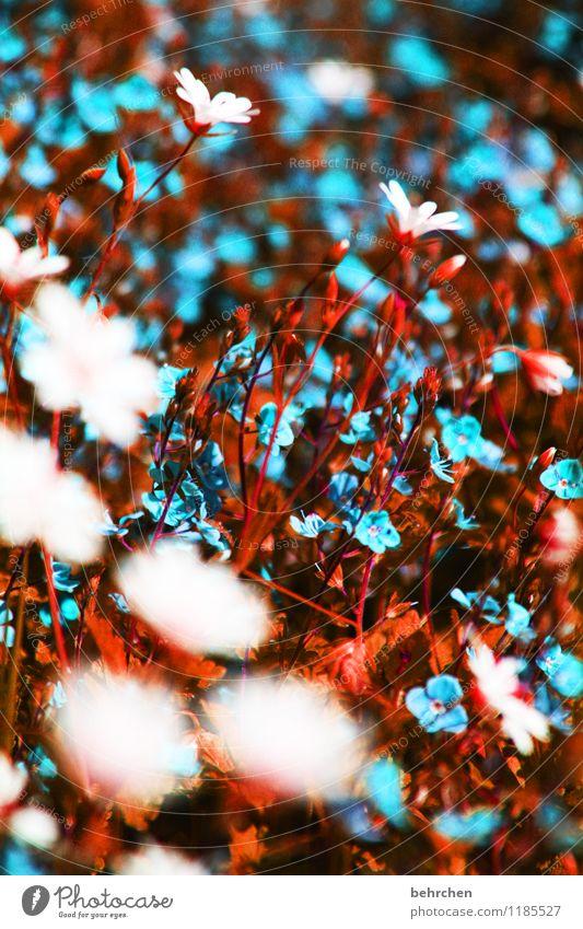 unnatürlich natürlich Natur blau Pflanze schön Sommer weiß Blume Landschaft Blatt Frühling Blüte Herbst Wiese Gras klein Garten
